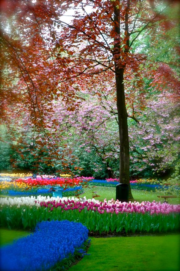 Spring's splendour at the Keukenhof, Holland